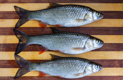 Fresh fishes Royalty Free Stock Photo