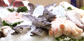Fresh fishes Royalty Free Stock Image