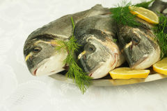 Fresh fishes from Aegean sea. Greece Royalty Free Stock Image