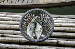 Fresh fishes in basket at Kanchanaburi, Thailand Stock Image
