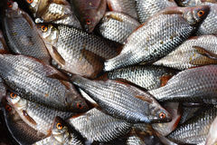 Fresh fishes Royalty Free Stock Images