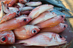 Fresh fishes at the fish market on the beach Stock Photos