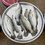 Fresh fishes at the fish market Royalty Free Stock Photo