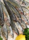 Fresh Fishes in fish market for sale on ice. Stock Photography