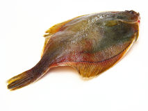 Fresh fishes flounder  on white background Royalty Free Stock Photography