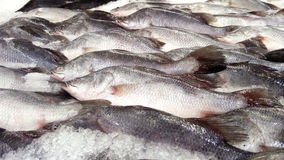 Fresh fishes Giant Perch Royalty Free Stock Photos