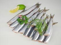 Fresh fishes herrings Royalty Free Stock Photos