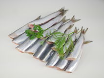 Fresh fishes herrings Royalty Free Stock Photo