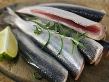 Fresh fishes herrings Stock Photos