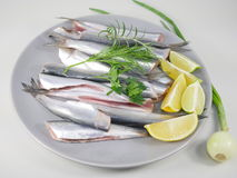 Fresh fishes herrings Royalty Free Stock Photography