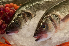 Fresh fishes on ice Royalty Free Stock Photography