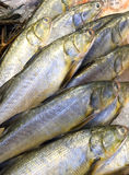 Fresh fishes on ice background Royalty Free Stock Image