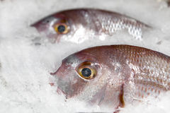 Fresh fishes on ice closeup. In open market Royalty Free Stock Photos