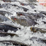 Fresh fishes on ice at the fish market Royalty Free Stock Photo
