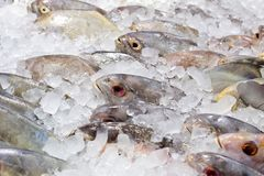 Fresh fishes on ice at the fish market Royalty Free Stock Image