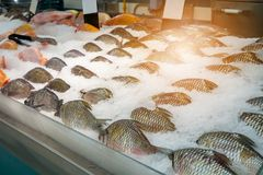 Fresh fishes on ice in market. Fresh fishes on ice in the market royalty free stock photo