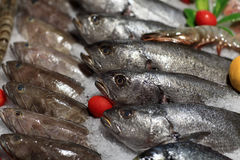 Fresh fishes on the ice Stock Images