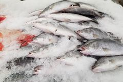 Fresh fishes on ice in market. Fresh fishes on ice in the market stock images