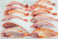 Fresh fishes on ice at market or supermarket, focused at the right one on second row Stock Photos