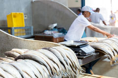 Fresh fishes inside the famous Ver Peso Market in Belem do Para, Brazil Stock Photography