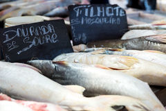 Fresh fishes inside the famous Ver Peso Market in Belem do Para, Brazil Royalty Free Stock Images