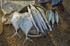 Fresh fishes in Kanyakumari fish market Royalty Free Stock Photo