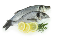 Fresh fishes Stock Photos