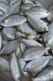 Fresh fishes at the market Royalty Free Stock Images