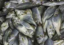 Fresh fishes in market. A catch of fishes on a fish market Stock Images