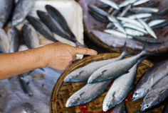 Fresh fishes at a market, close up. Fish caught from East Sea Royalty Free Stock Image