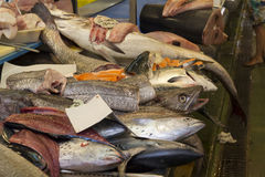 Fresh fishes in a market. Different types Royalty Free Stock Photo