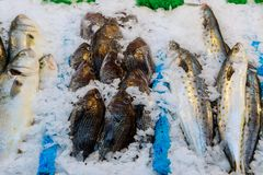 Fresh fishes in a market. Fish on ice on the market Stock Photo
