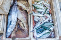 Fresh fishes on market, Island in Thailand Royalty Free Stock Image