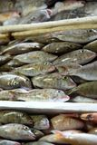Fresh fishes in a market. Portrait of Fresh fishes in a market Royalty Free Stock Photography