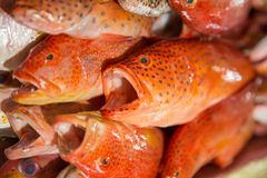Fresh fishes in a market. Portrait of Fresh fishes in a market Stock Photos