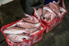 Fresh fishes in a market. Portrait of Fresh fishes in a market Stock Images