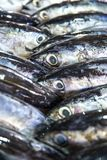 Fresh fishes in a market. Portrait of Fresh fishes in a market Royalty Free Stock Photo