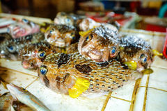 Fresh fishes in a market Royalty Free Stock Images