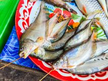 Fresh fishes in a market,Thailand. Fresh fishes in a market, Ubon Ratchatani, Thailand Royalty Free Stock Photo