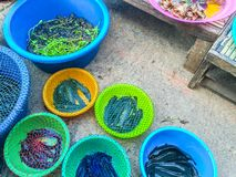 Fresh fishes in a market. Ubon Ratchatani, Thailand Stock Photography