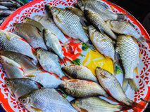 Fresh fishes in a market. Ubon Ratchatani, Thailand Stock Image