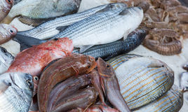 Fresh fishes and other seafood on market in Morocco ready for se Stock Photo