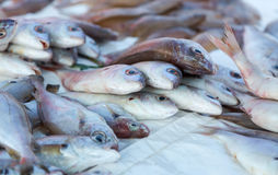 Fresh fishes and other seafood on market in Morocco ready for se Royalty Free Stock Photography