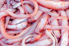 Fresh fishes and other seafood on market in Morocco ready for se Royalty Free Stock Image