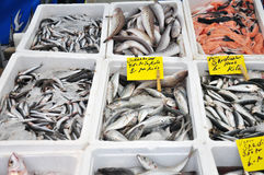 Fresh fishes for sale in the market Stock Photos