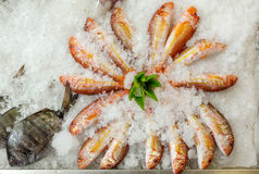 Fresh fishes seafood background on ice. Decorated with paprika pepper, Azores, Portugal Royalty Free Stock Photos