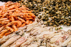 Fresh Fishes And Seafood On Ice In Market. Fresh Fishes And Seafood On Ice In Fish Market Stock Image