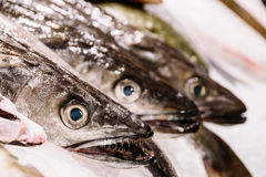 Fresh Fishes And Seafood On Ice In Market Royalty Free Stock Photography