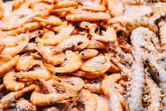 Fresh Fishes And Seafood On Ice In Market Royalty Free Stock Images