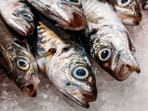 Fresh Fishes And Seafood On Ice In Market Stock Images